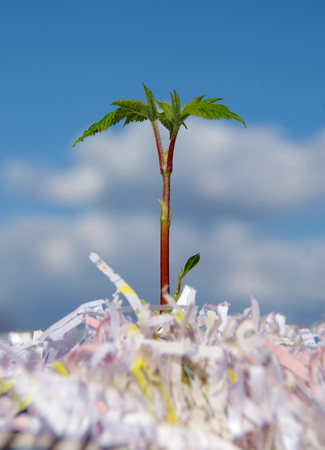 Very young seedling plant growing up from waste paper on sky background, concept of live recycling