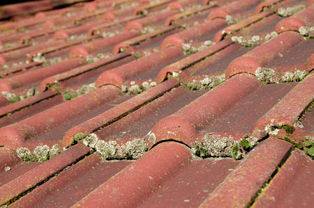 Dirty roof and gutter need cleaning. Problem with leaves and moss.