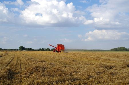 Red combine-harvester working on grain field. Harvesting time.
