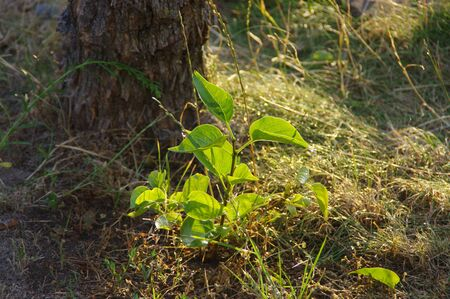 Young plant with fresh green leaves on dry soil. Ecology and natural environment care concept. Imagens