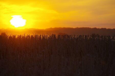 Harvest season - field at sunset. August rural scene.