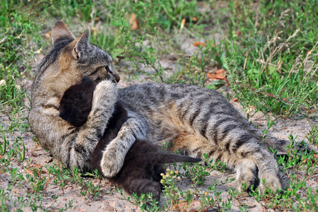 Kleine schwarze Katze hat einen Favoriten Erstgeborenen Katze namens Zosia Standard-Bild - 55048900