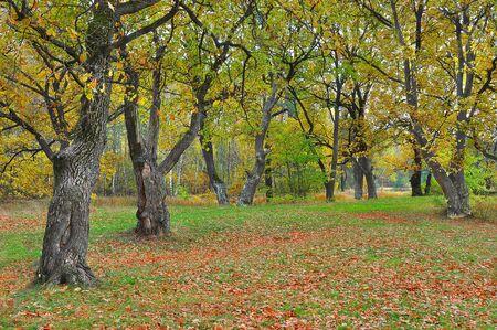 come in: Autumn has come in oak grove