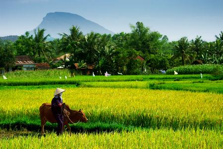 vietnamese farmer Фото со стока