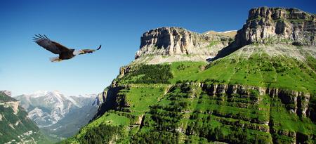 eagle flying: eagle