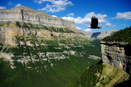 eagle canyon: eagle flying in a canyon Stock Photo