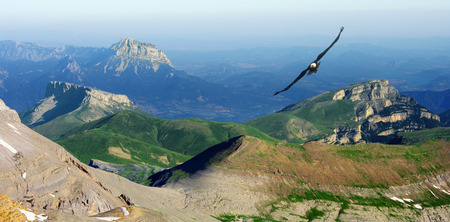 eagle canyon: Spanish Pyrenees, Aragon