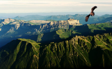 eagle canyon: vulture flying above the Alps