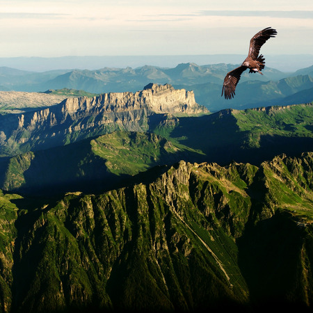 vulture flying above the Alps