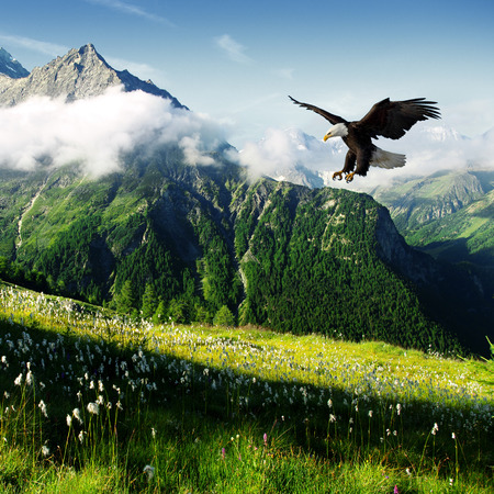 eagle hunting photo