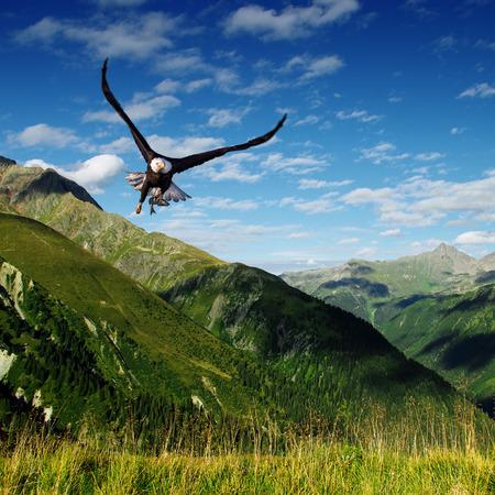 eagle photo