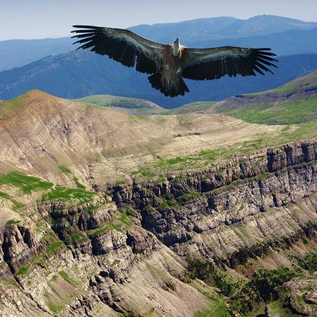 rift: vulture Stock Photo