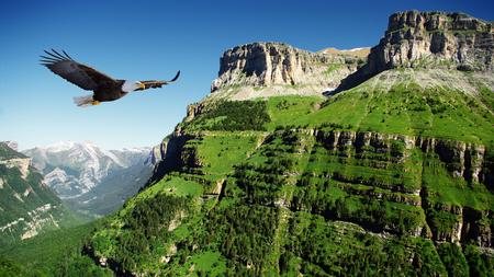 eagle canyon: eagle flying Stock Photo