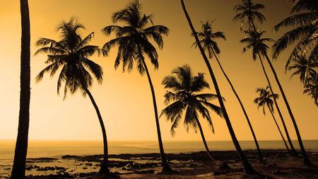 tropics: tropics Stock Photo