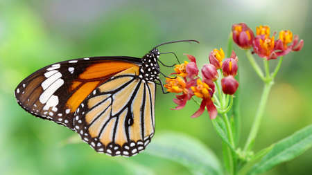 monarch butterfly on a flower Imagens