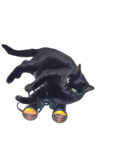 Black cat and large binoculars Stock Photo - 5936853
