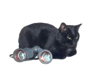 grabing: Black cat and large binoculars