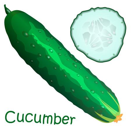 Flat cucumber isolated on white background.