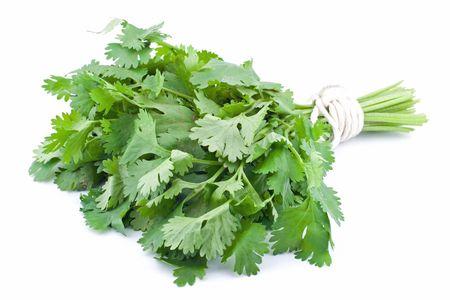 cilantro: Cilantro o cilantro empat� en un mont�n