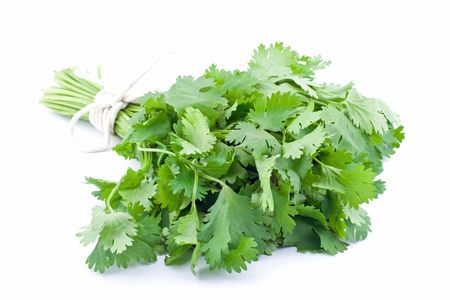 кинза: Coriander or Cilantro tied in a bunch Фото со стока