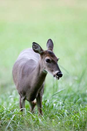 Curious doe Imagens