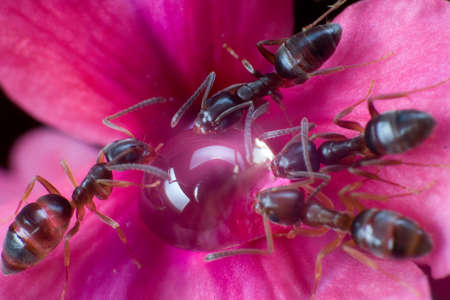 Overhead view of ants feasting on honey Imagens