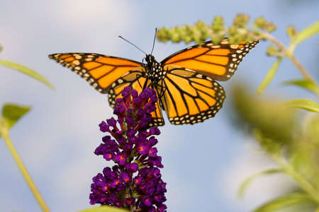 A butterfly high up in the sky atop a purple plant