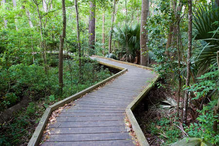 Natural wooden leafy pathway with trees and ferns photo