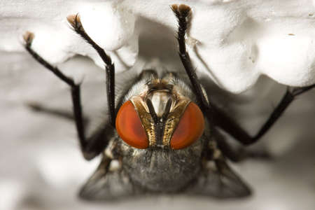 bumpy: Macro of a housefly on a bumpy surface