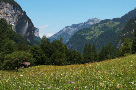 austrian: A meadow filled with flowers between the mountains