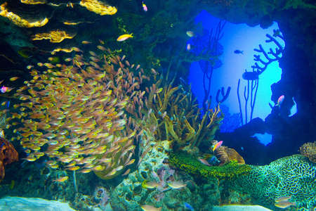 reefscape: Vivid tropical fish swim through the brightly colored waters