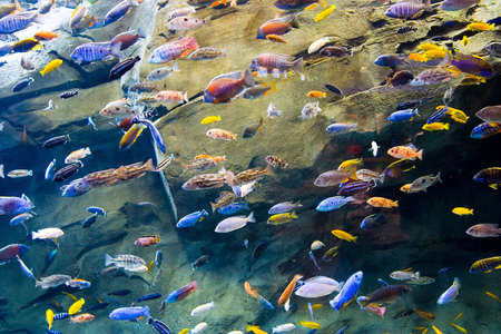 salt water fish: A school of tropical fish swim through the water Stock Photo