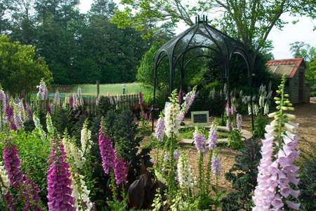 Foxglove garden with metallic archway