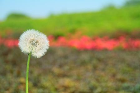 Spring popular plants