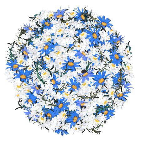 anemone frame
