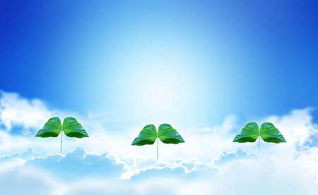 Blue Sky, Clouds, and Futaba Buds