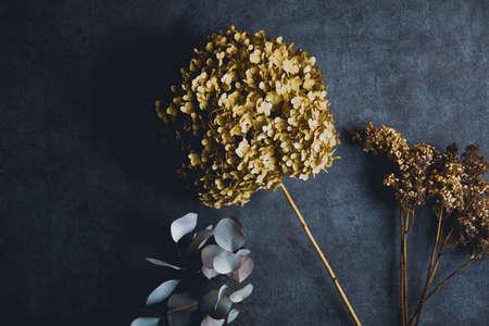 Hydrangea Annabelle Dried Flower