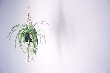 Indoors with hanging plant hanging plant green Standard-Bild