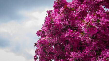 flowers on the sky