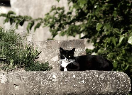 gracieuze kat ontspannen in de ochtend zon