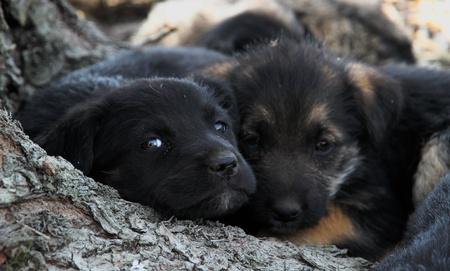 triest puppys Stockfoto