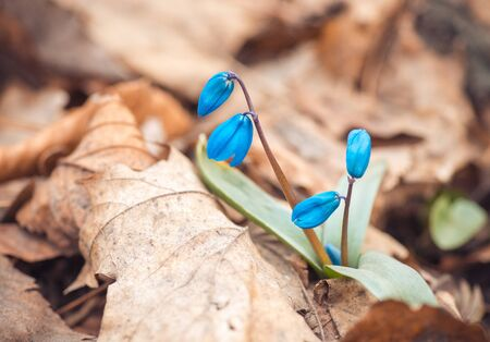 <b>Spring</b> Bluebells Time-Lapse Footage Dolly Shot - <b>Beautiful Spring</b> ...