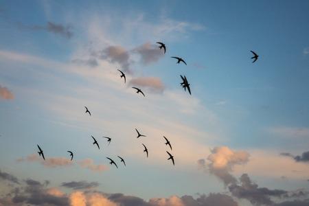Flock of birds flying across a fiery sunset sky.