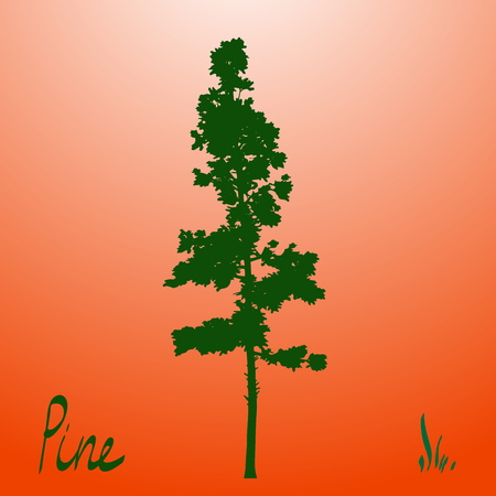 pacific northwest: Pacific northwest pine old growth evergreen tree silhouette.