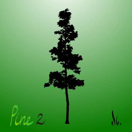 pacific: Pacific northwest pine old growth evergreen tree silhouette.