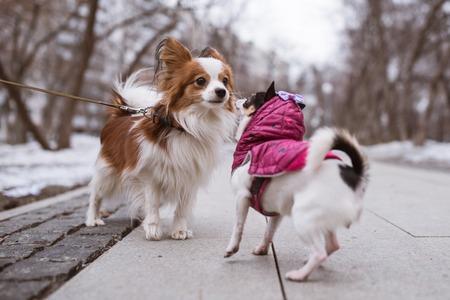 perros graciosos: dos perros divertidos olfatea el uno al otro