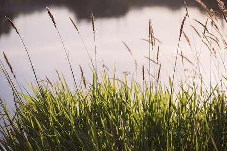 grass sedge on the background of the autumn Lake with copyspace. Stock Photo