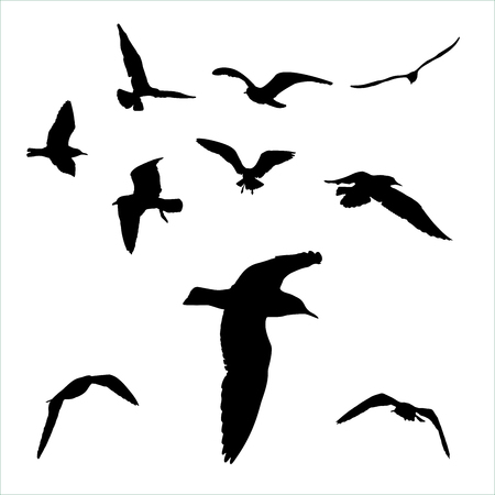Vector set - seagull silhouette on white background collection.