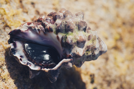 Sea shell on stone sun lit background macro closeup.