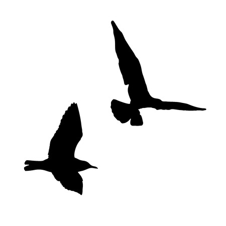 webbed: Seagull silhouette on white background collection